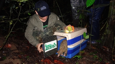 Java pangolins released into wild