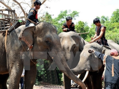 Elephant conservation comes into spotlight