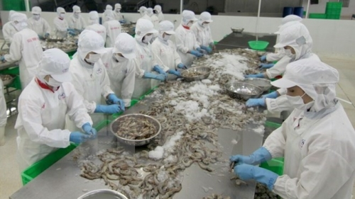Finding ways to boost seafood exports