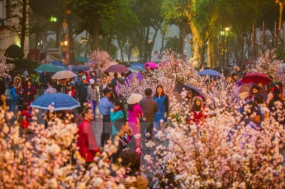 NA leader visits cherry blossom in Hanoi