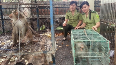 Measures needed to prevent illegal wildlife trade