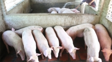 Ministries discuss measures to deal with oversupply of pork