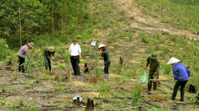 Developing sustainable forest environmental services