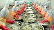 Australia allows shrimp processed in Vietnam to be re-imported