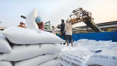 Vietnam's rice exports return to growth