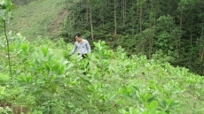 Vietnam plants additional 90,700 hectares of forest in first half
