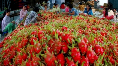 Measures to promote exports of vegetables and fruits