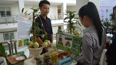 Conference discusses development of Lam Dong high-tech farming