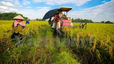 Vietnam, Germany cooperate in vocational training for farmers