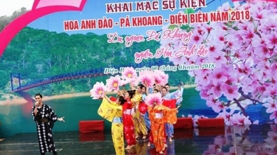 Dien Bien hosts first cherry blossom festival