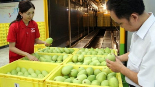 Vietnam earns US$13 million from fruit and veg exports each day as Tet nears