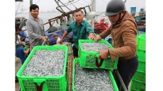 Fishermen haul in bumper catch on first trips at sea in Lunar New Year