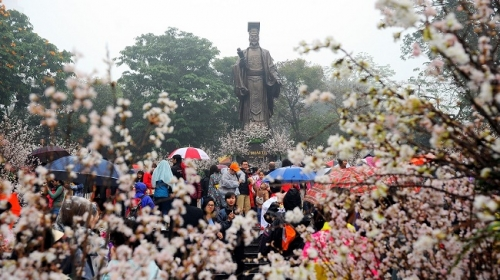 Cherry blossom display a highlight of Vietnam-Japan cultural exchange festival