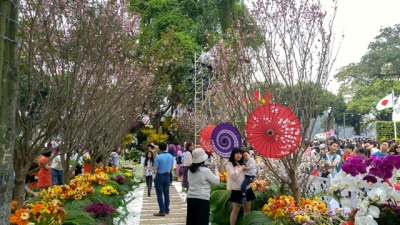 Cherry blossoms in full bloom at Hanoi's Japanese festival