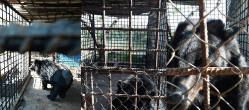 Can Tho city reports no more bears in captivity