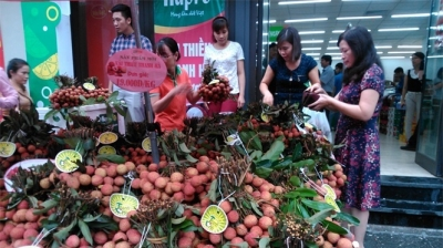 Festival promotes consumption of Thanh Ha litchi