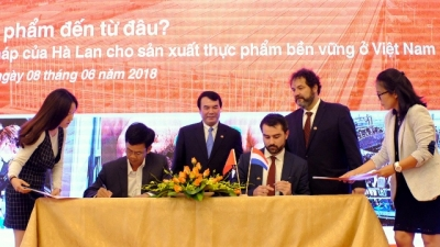 Lam Dong, Netherlands cooperate to develop new vegetable varieties