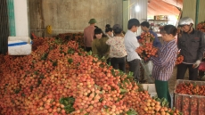 Bac Giang exports nearly 350 tonnes of lychees by air freight