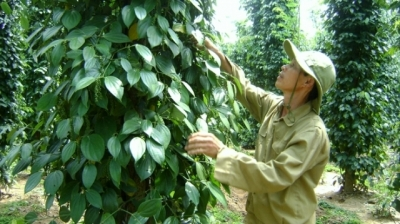 Quality key to Vietnamese agricultural exports to EU