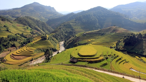 Mu Cang Chai in harvesting season