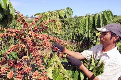 Removing difficulties for coffee industry