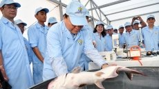 PM visits high-tech tra fish farm in An Giang