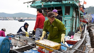 Farmers start cultivation, fishermen earn good catch at the beginning of Lunar New Year
