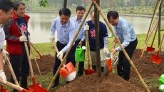 More 1,000 Japanese cherry blossom trees planted at Hanoi's Hoa Binh Park