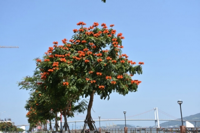 Da Nang city bright with colourful flowers in March