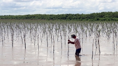 Action plan promulgated to develop Mekong Delta's adaption to climate change