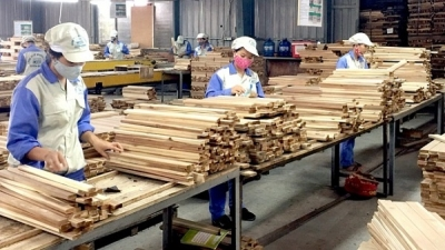 Boosting sustainable exports of forest products