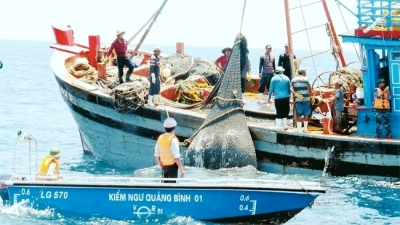National Steering Committee on IUU Fishing Prevention set up