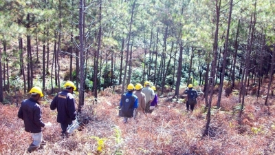 Vietnam aims to raise Central Highlands' forest cover to 49.2% by 2030