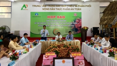 Bac Giang's Luc Ngan lychee to be introduced in Hanoi
