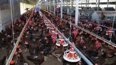 Vietnam promotes export of poultry products