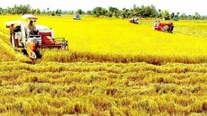 Conference discusses Vietnam's agricultural opportunities, challenges when joining EVFTA