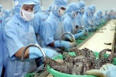 Vietnamese shrimp exporters enjoy zero taxes to US