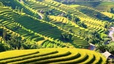 Tourism programme of Hoang Su Phi terraced rice fields opens