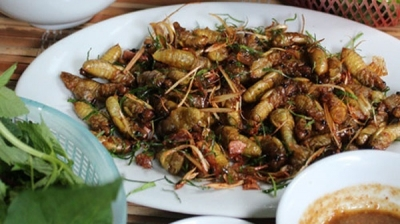 Dried milk cicadas: A must try dish for visitors to Son La