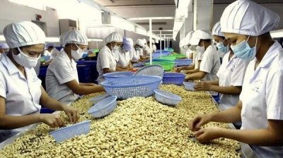Vietnam's two-month cashew exports to US up