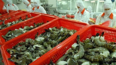 Vietnamese enterprises informed of Australia's new shrimp export regulations
