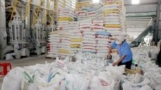 Rice exports up nearly 18% in H1