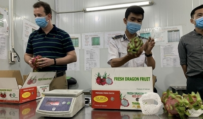 Quarantine stepped up for fruit exports to US