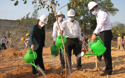 Nationwide response to tree planting festivals