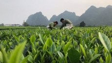 Vietnam's agriculture grows up thanks to EVFTA