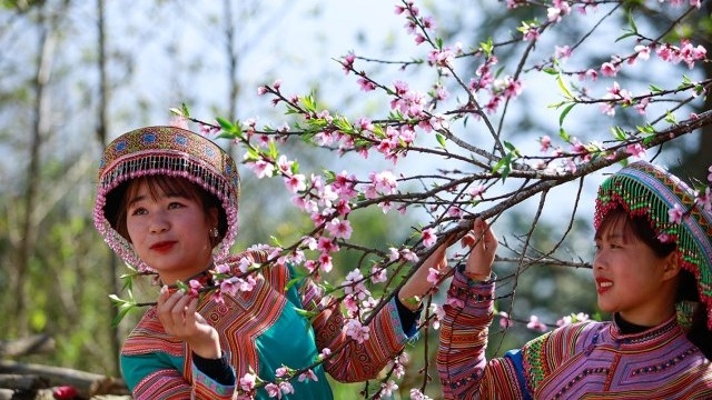 Get lost in peach bloom forest in Sa Pa